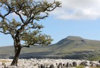 © Sue Best  <em>Ingleborough</em>