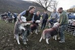 © John Bentley  <em>Buttermere Shepherds Meet</em>