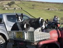 © John Bentley  <em>Sheepdog Trials, Oakworth</em>