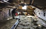 © John Bentley  <em>Lambing at Hoggarths Farm</em>