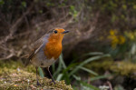 © Peter Robinson  <em>Robin...2nd attempt with remote control</em>