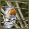 © Sue Haddrill  <em>Cheeky Chappy</em>