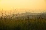 © Chris Chandler<em>Ingleborough Meadow</em>