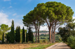 © Ian Hughes<em>Glimpse of Assisi</em>