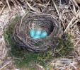 © Jeanette Davidson<em>nest</em>