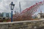 © Stuart Jackson  <em>poppy arch and shard</em>